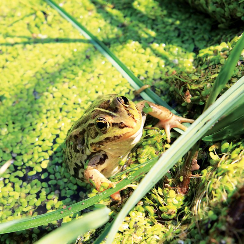 Pest Control For Frogs | Pest Control
