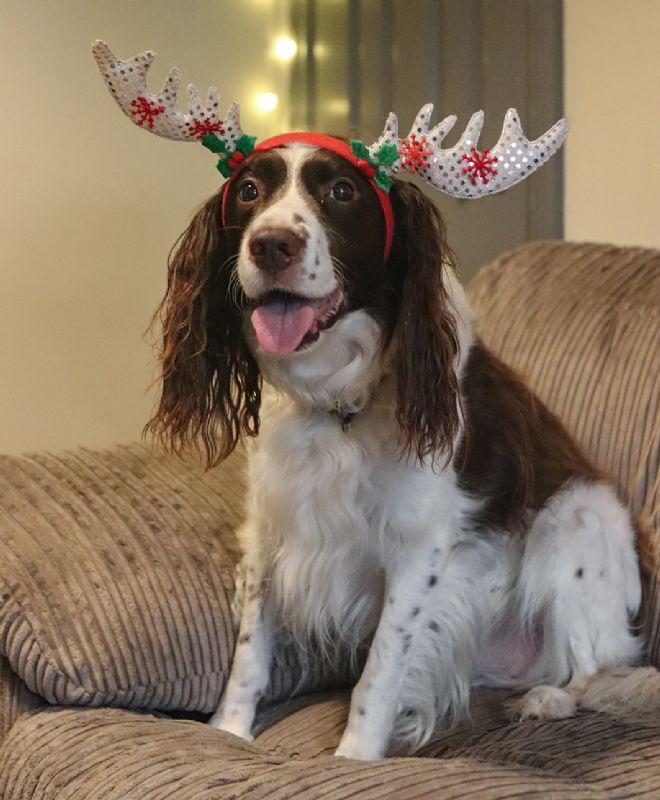 Sue Ryder Leckhampton Court Hospice's staff member's dog, Marley